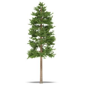 max pine