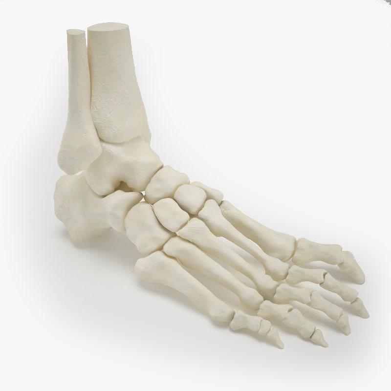 3d human foot