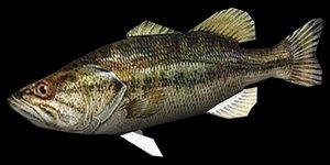 max bass