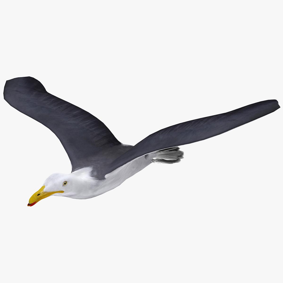 flying gull 2 animation 3d model