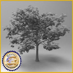 3d tree chestnut model