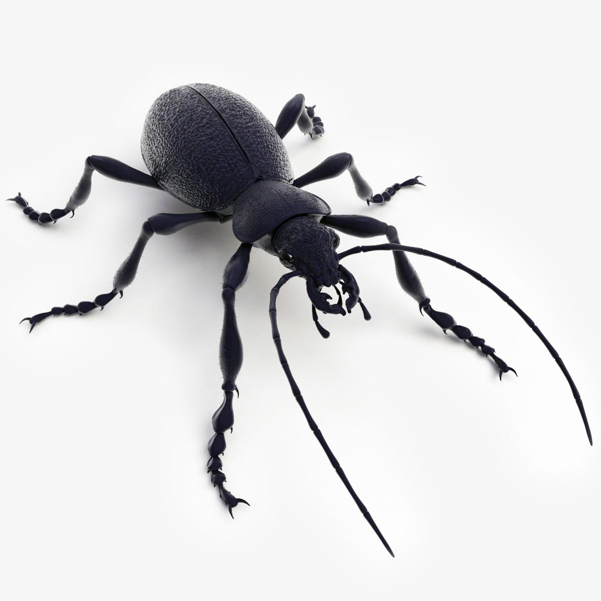 ground beetle max