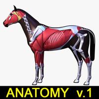 Horse Anatomy v.1