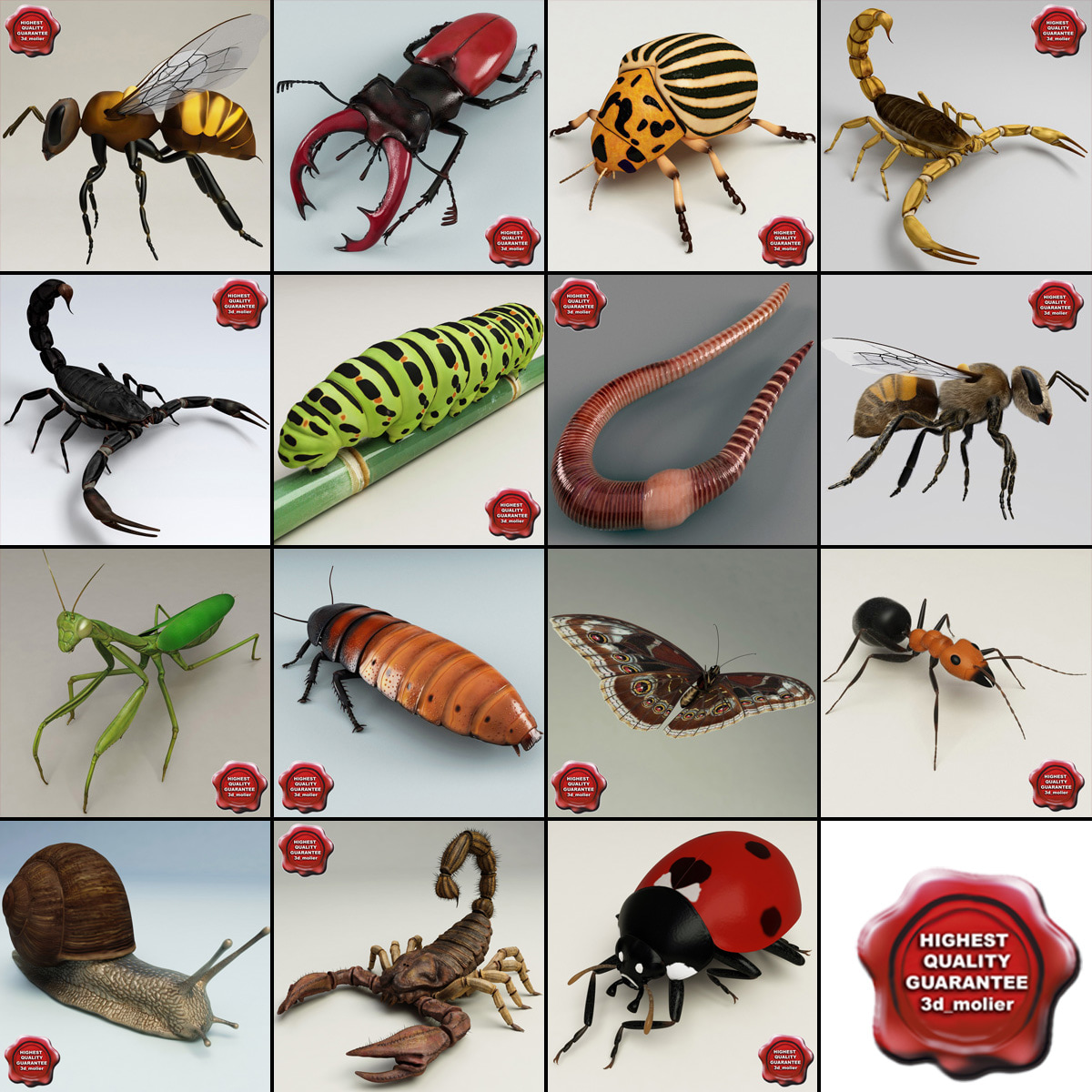 insects v6 3d model