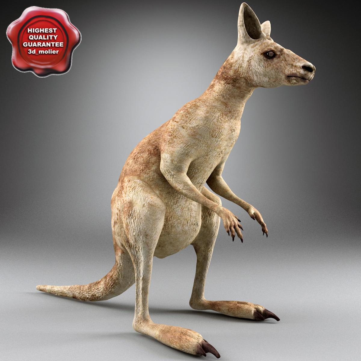 3d kangaroo modelled model