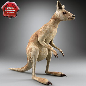 3d kangaroo modelled model