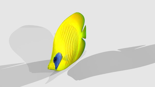 3d yellow tropical fish model