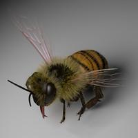 Honeybee 3ds Max
