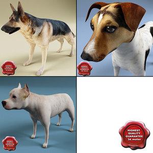 dogs set shepherd max