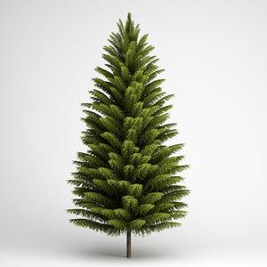 norway spruce 21 c4d