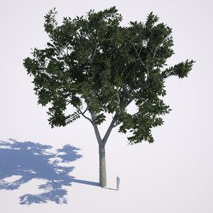 3d max ash tree green