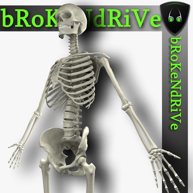 max human skeleton