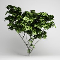 3d umbrella tree 07 model