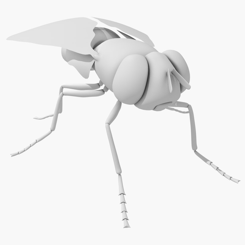 fly bug housefly 3d max