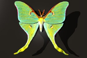 luna moth 3d 3ds