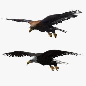 ma eagles animator