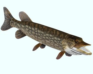 3ds max pike northern