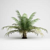CGAxis Sugar Palm 02