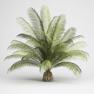 oil palm 06 3d max