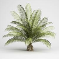 CGAxis Oil Palm 06