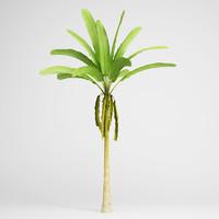 banana tree 16 3d max