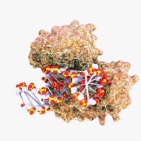 dna polymerase protein 3d max