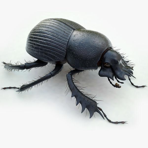 max dung beetle