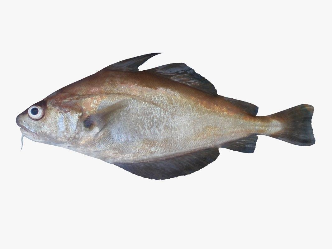 3d model pout fish
