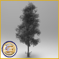 max tree generic