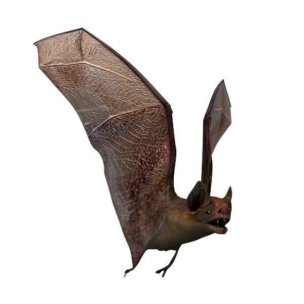 3d vampire bat model