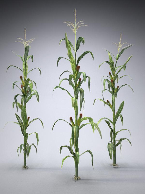 Corn Plant 3ds set corn plants