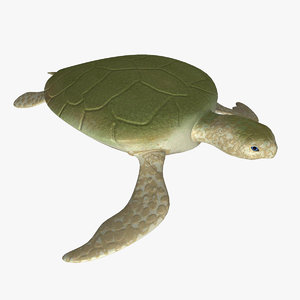 3d turtle rigged normal