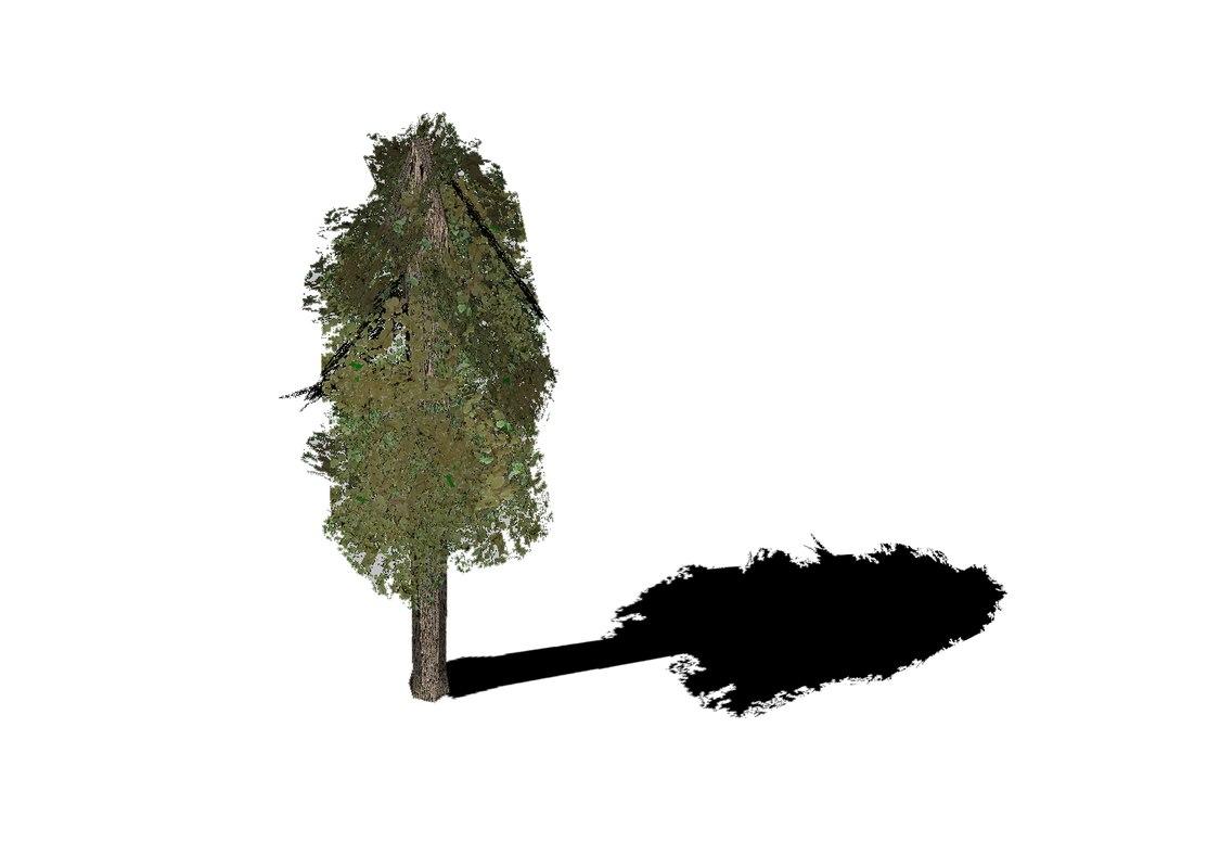 free pine tree 3d model