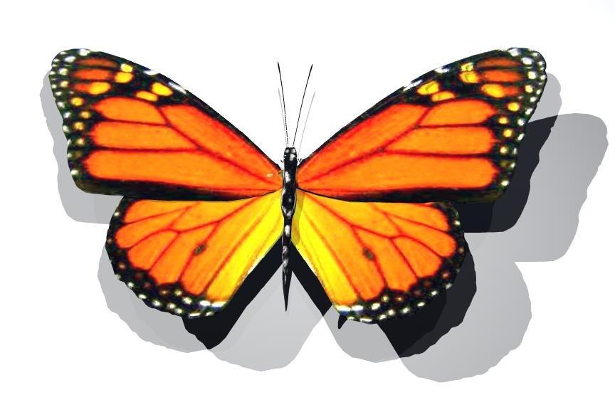 3d butterfly monarch fly model