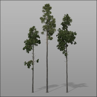 3d model forest trees - pines