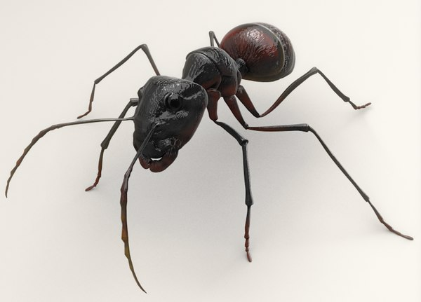 blend hymenoptera ant