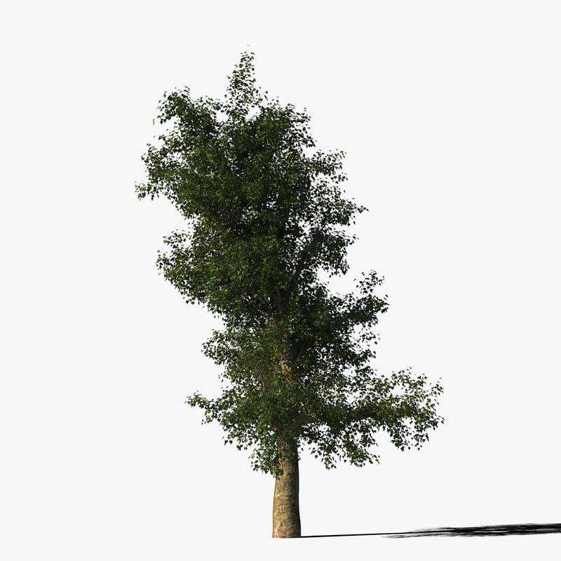 3d platanus tree bark model