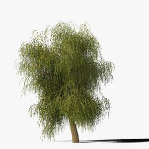 willow tree 3d max