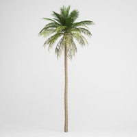 3d date palm 03
