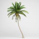 CGAxis Coconut Palm 04