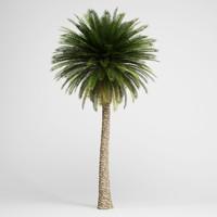 CGAxis Canary Island Date Palm 11