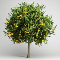 CGAxis Orange Tree 20