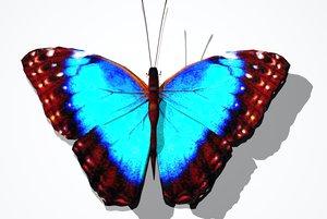common blue butterfly 3d model
