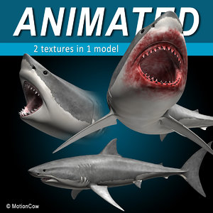 3d model great white