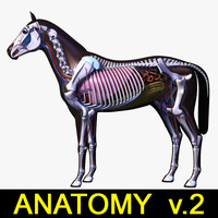 Horse Anatomy v.2