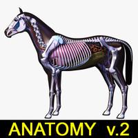 3d horse anatomy v 2
