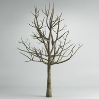 tree_04