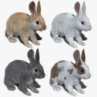 Rabbits Collection (FUR)
