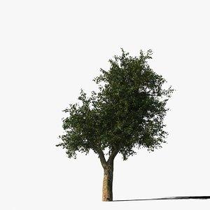platanus tree bark 3d model