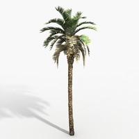3d phoenix palm